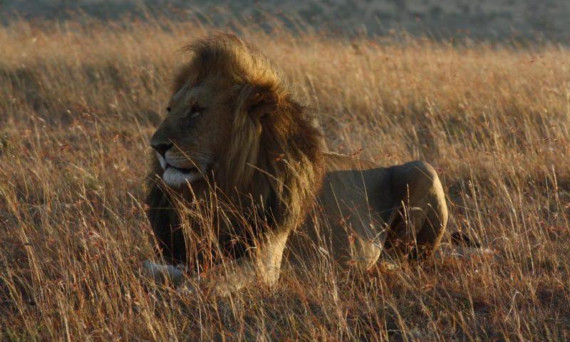 Spirit Of The Masai Mara - Kenya