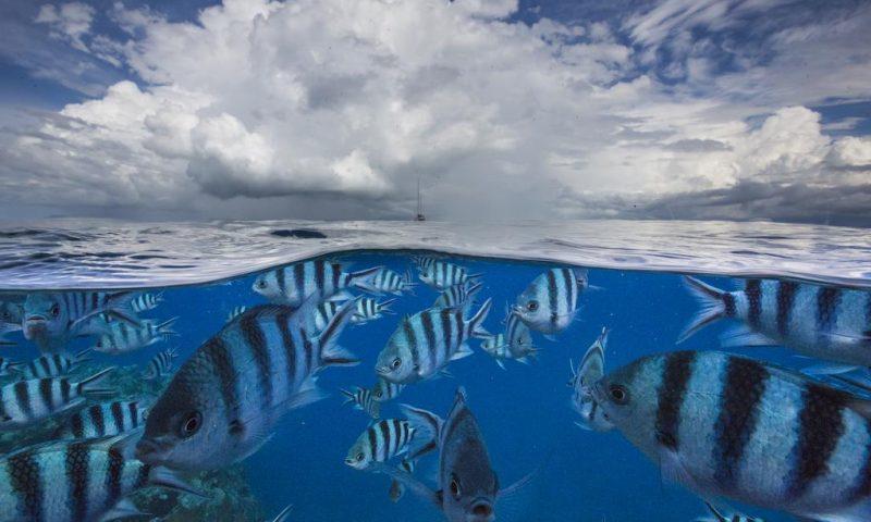 Treasure Island Fiji