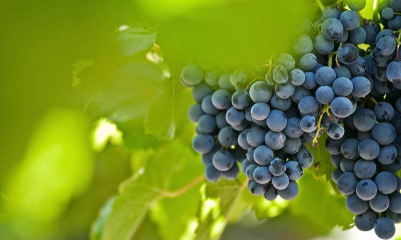 Cavas Wine Lodge Mendoza