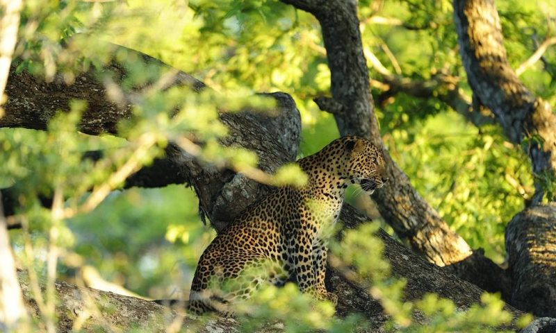 Kulu Safaris Yala